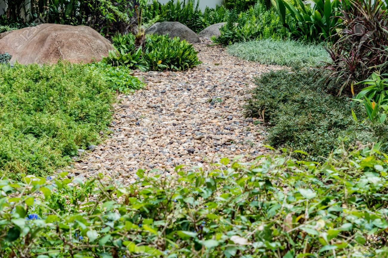 kies im garten, grüne blätter pflanzen mit kleinen kies im garten lizenzfreie fotos, Design ideen