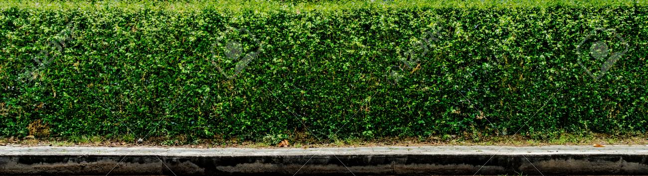 green hedge fence with concrete sidewalk stock photo picture and