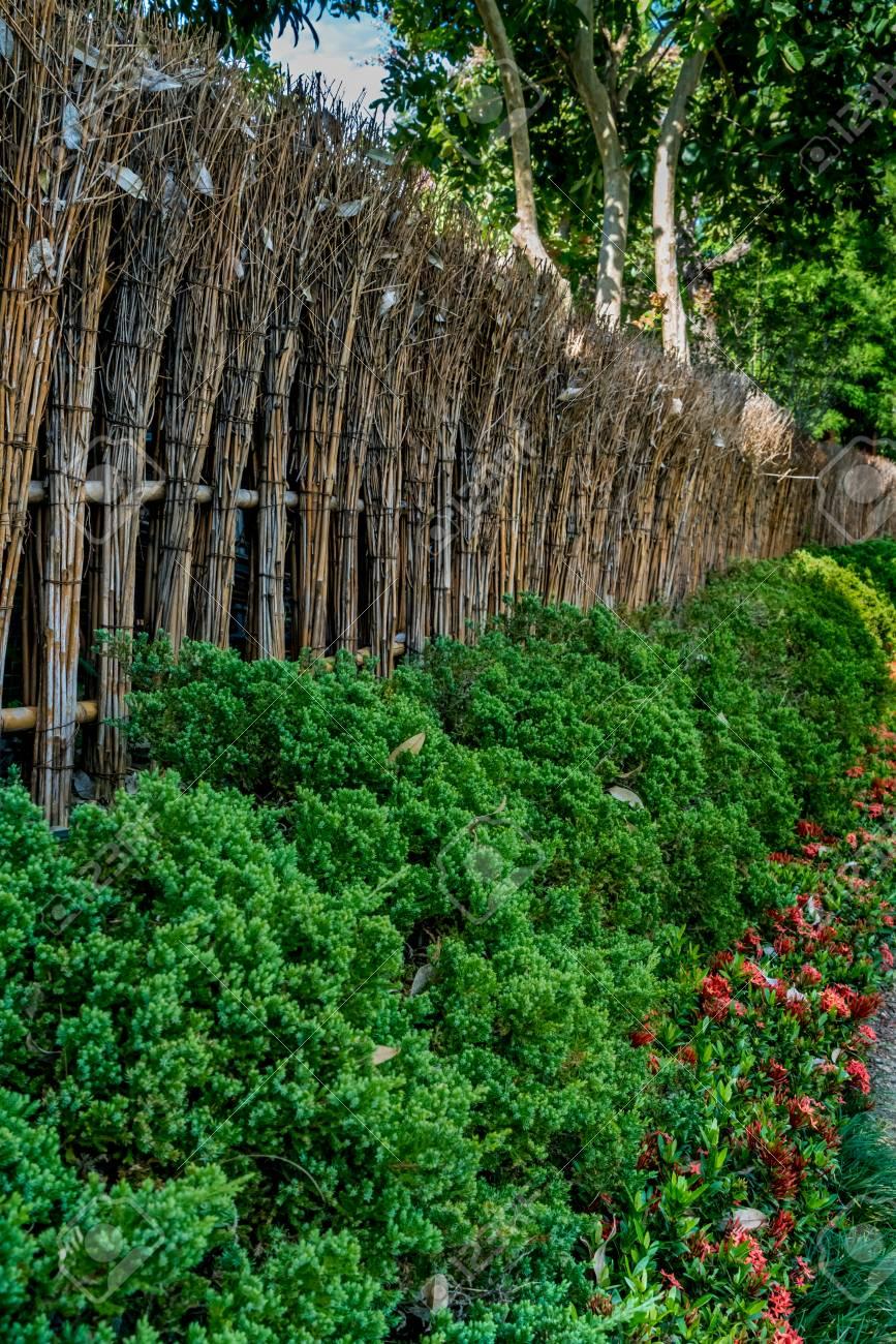 Clôture de bambou du jardin japonais avec des plantes vertes dans le parc