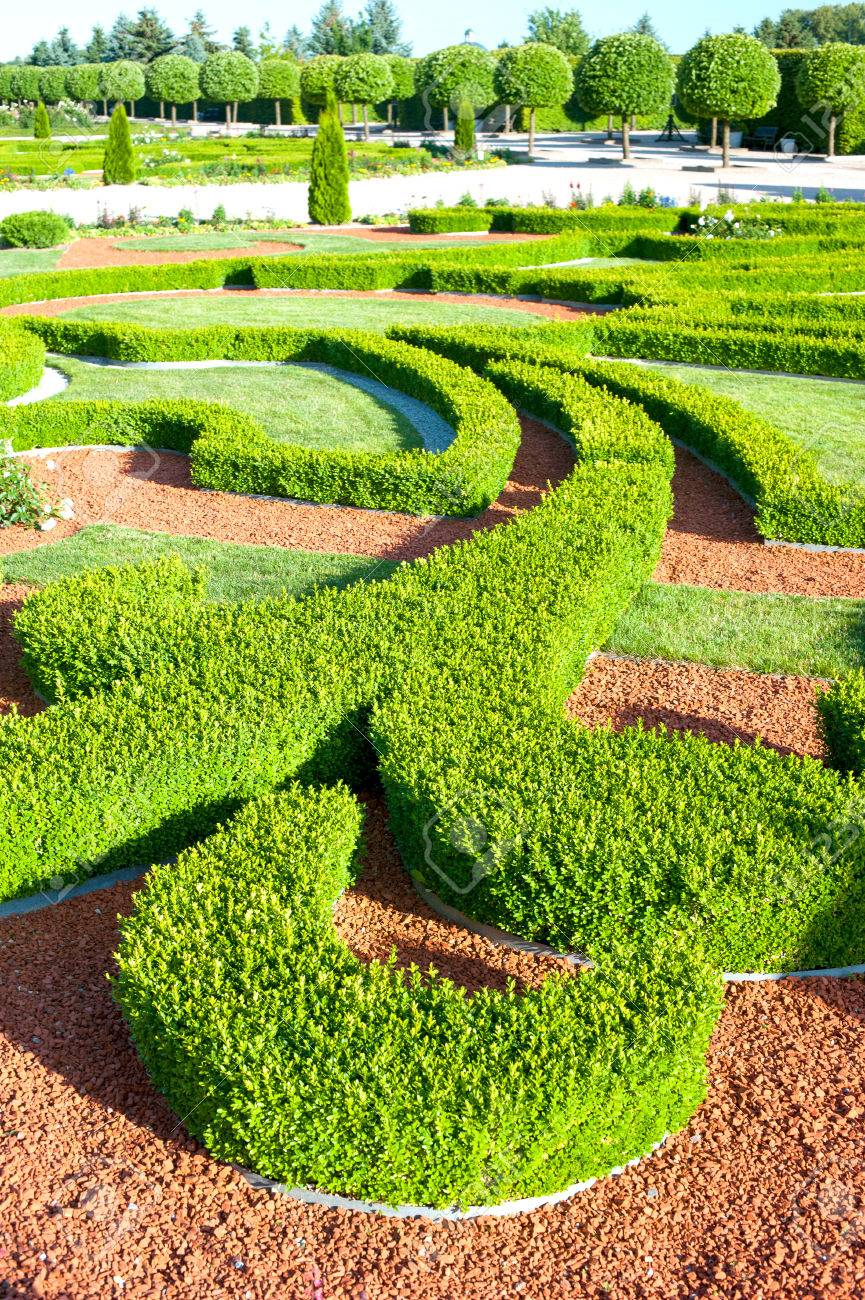 Curves Of Ornamental Garden With Boxwood Bushes. Buxus Sempervirens on