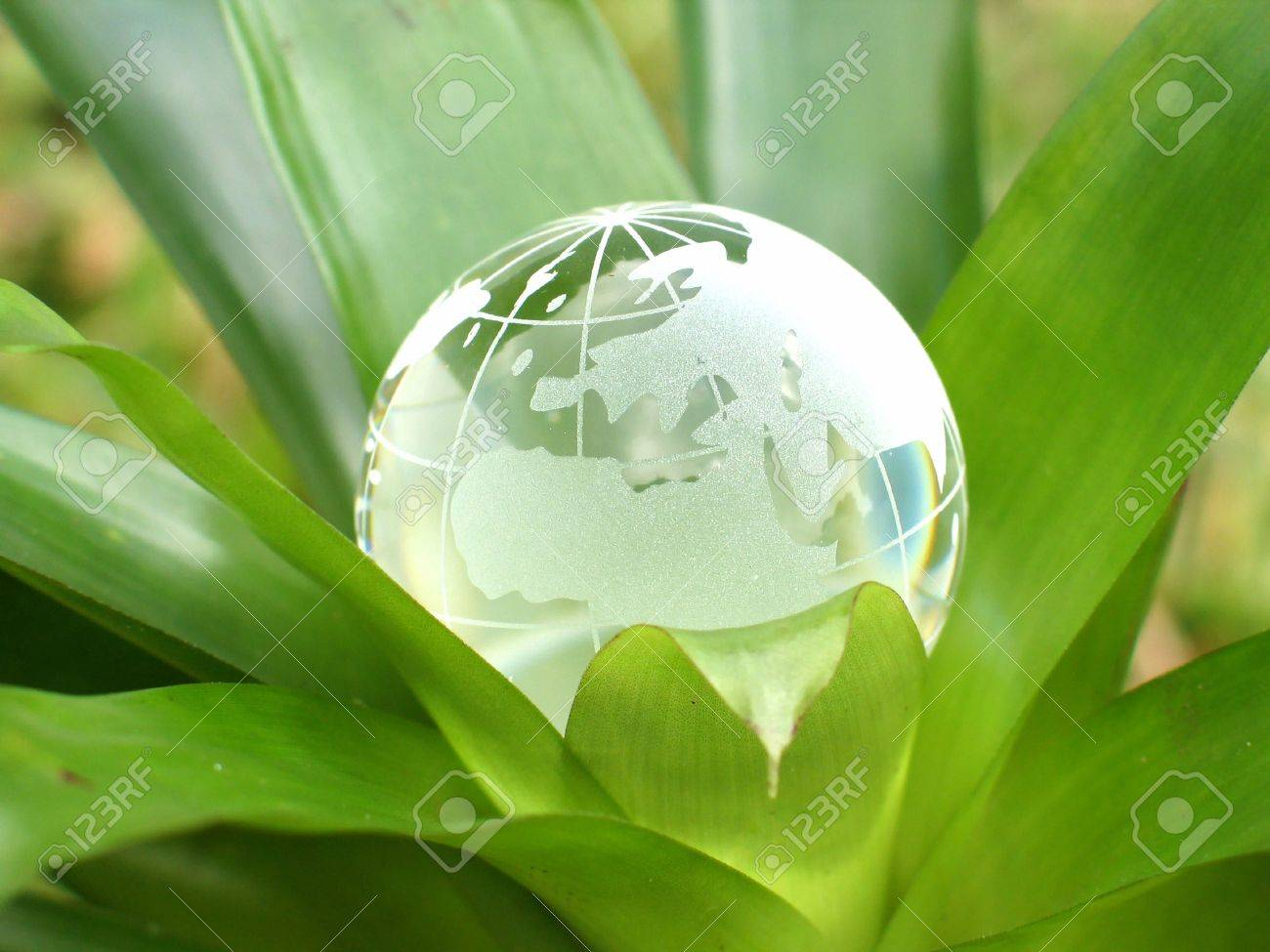 A crystal globe inside a plant. Concept representing growing world. Stock Photo - 205104