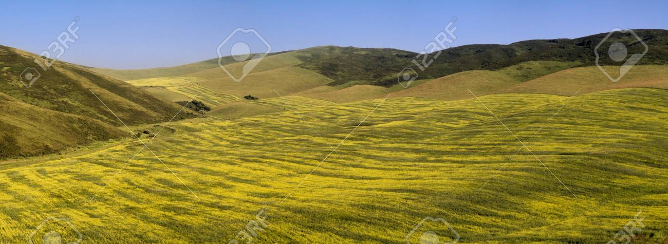 Beautiful curves agricultural fields Stock Photo - 13900441