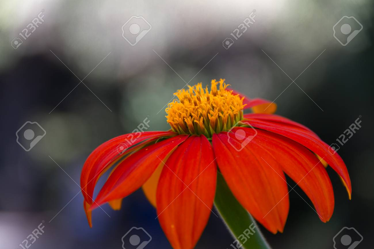 A Beautiful Dark Orange Flower With Yellow Center In Front Of