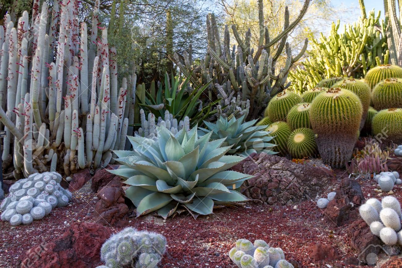 Amazing Desert Cactus Garden With Multiple Types Of Cactus In