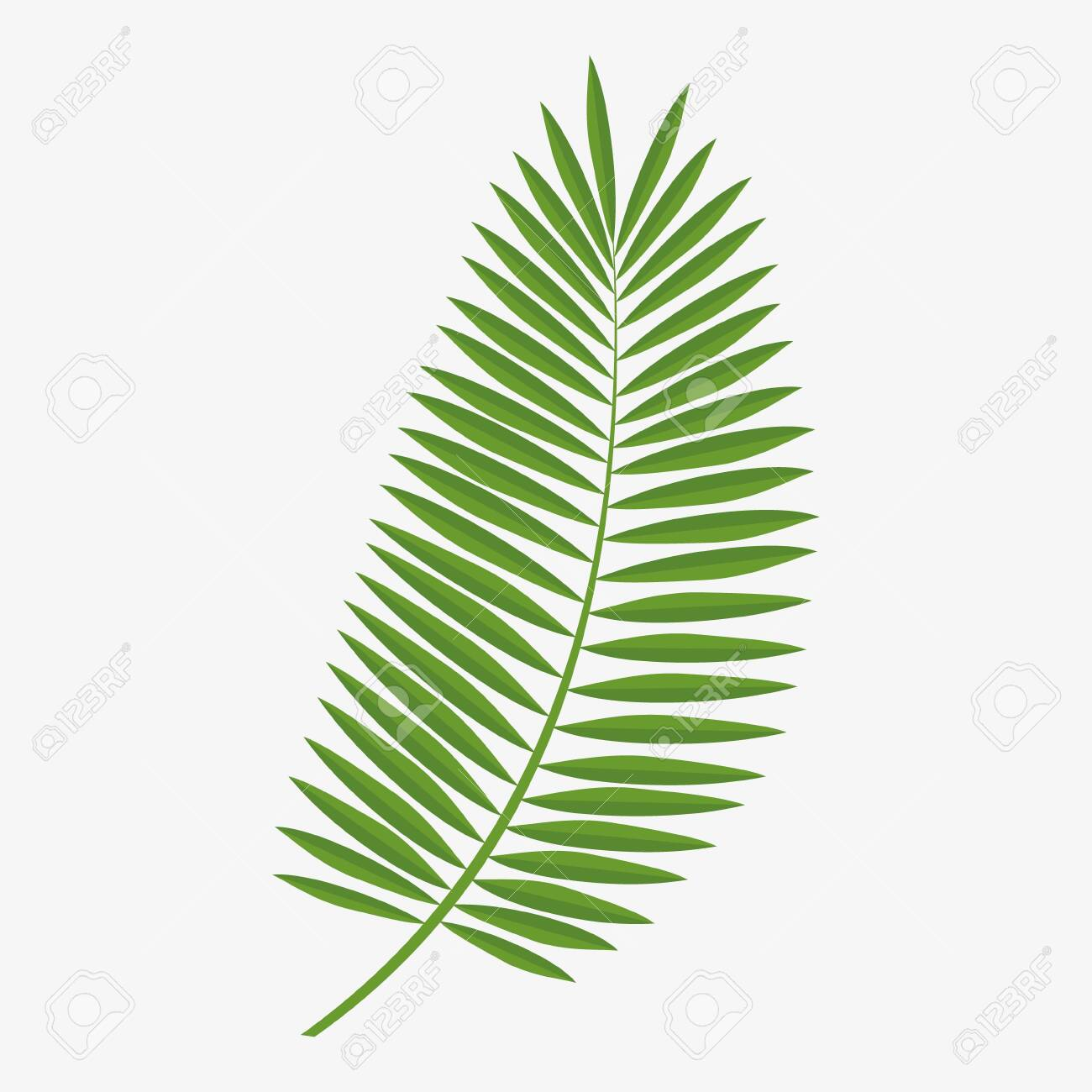 Vector graphics, green palm leaf.Graphics element. - 150321500