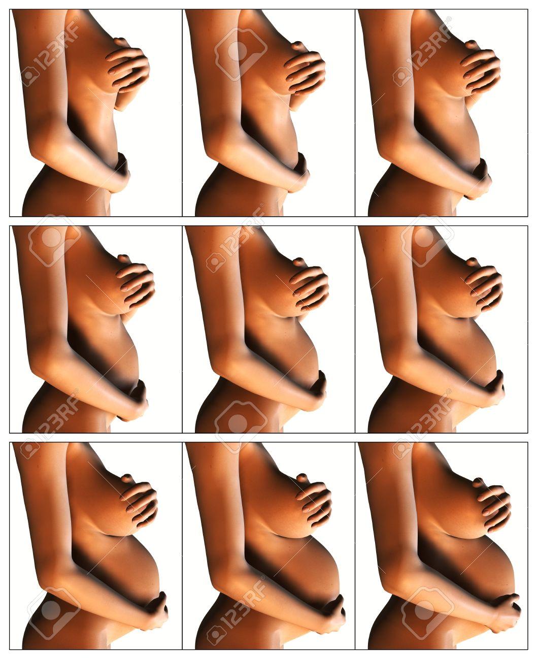 Размеры живота беременных 10 фотография