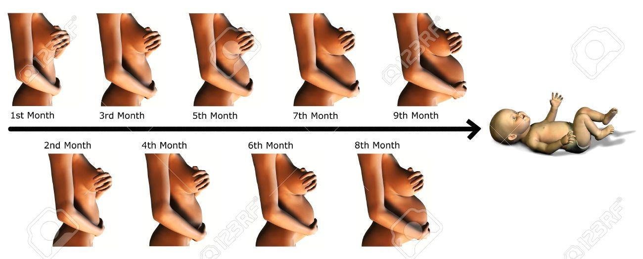 Una imagen que muestra las diferentes etapas de un niño de 9 meses de embarazo y un bebé al final.  Foto de archivo - 3040389