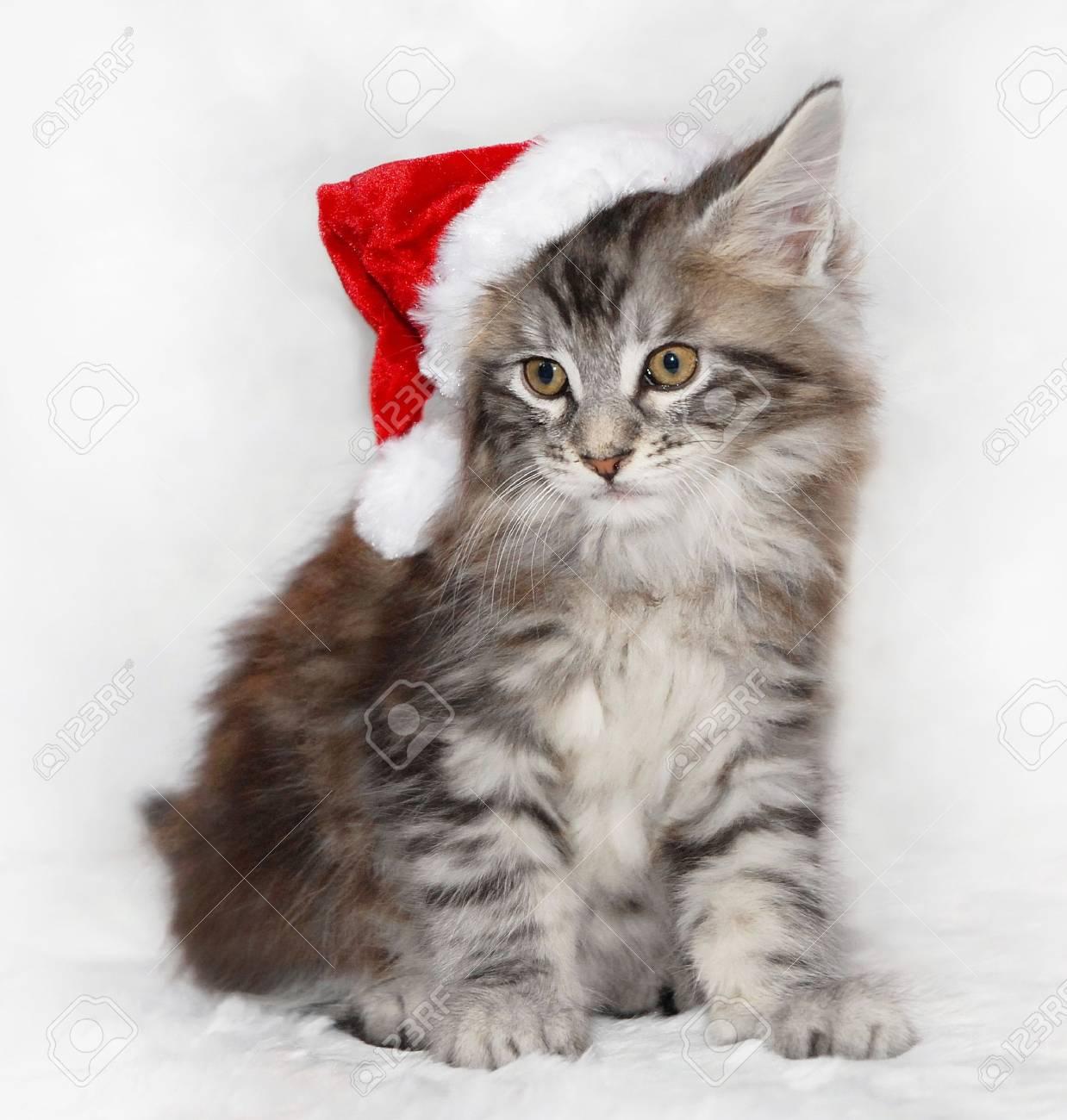 Kitten in Santa Hat Stock Photo - 4520755