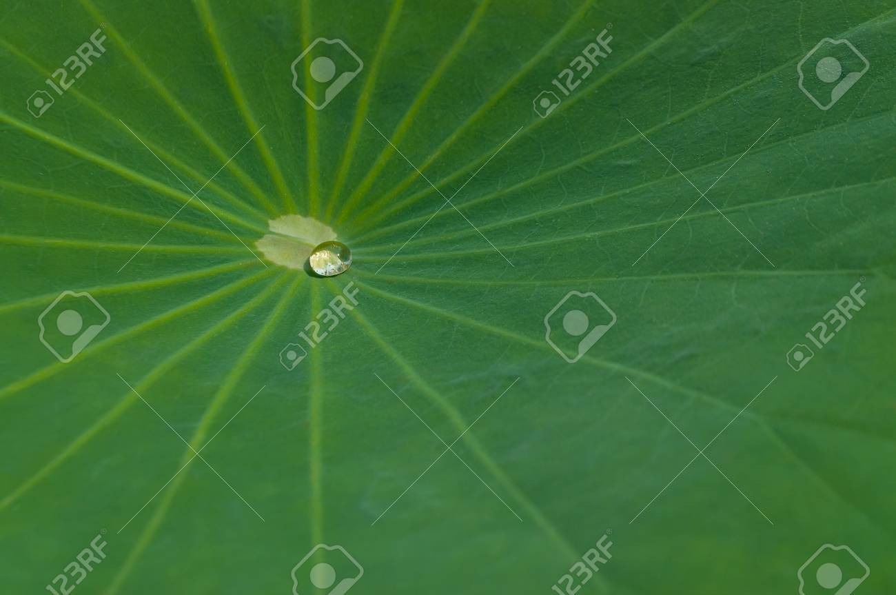 A Clear Drop Of Water On Clean Green Lotus Leaf The Buddha Quotes