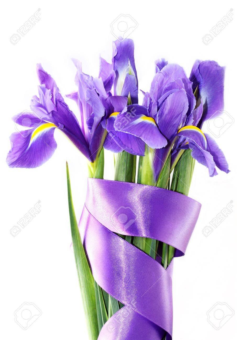 Beautiful dark purple iris flower isolated on white background stock beautiful dark purple iris flower isolated on white background stock photo 9768815 izmirmasajfo