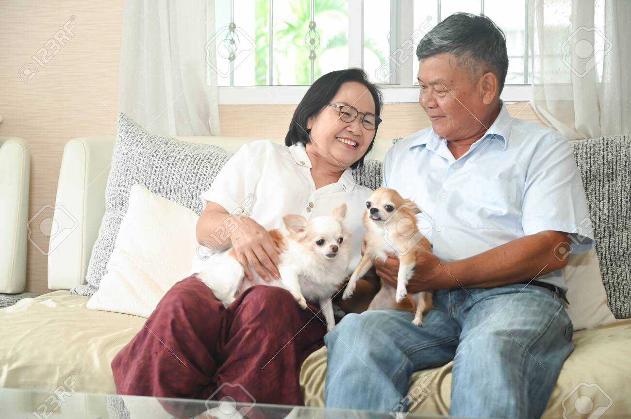 Elderly are sitting happily resting on the sofa with the dogs. - 146443974