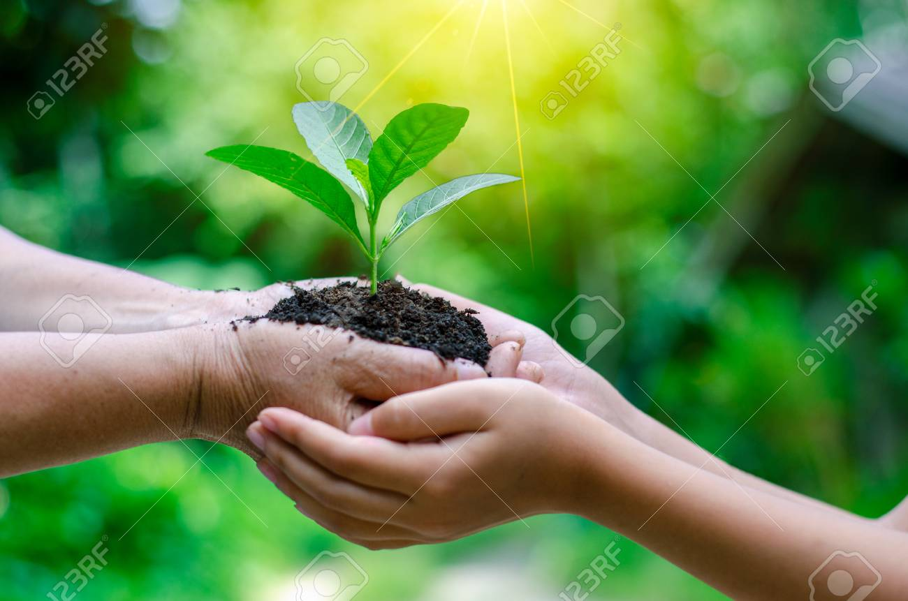 Adults Baby Hand tree environment Earth Day In the hands of trees growing seedlings. Bokeh green Background Female hand holding tree on nature field grass Forest conservation concept - 116558718