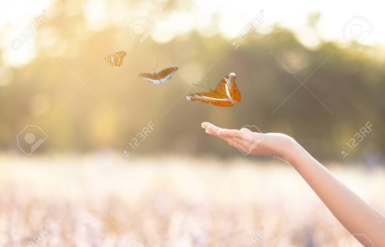 The girl frees the butterfly from the jar, golden blue moment Concept of freedom - 143371965
