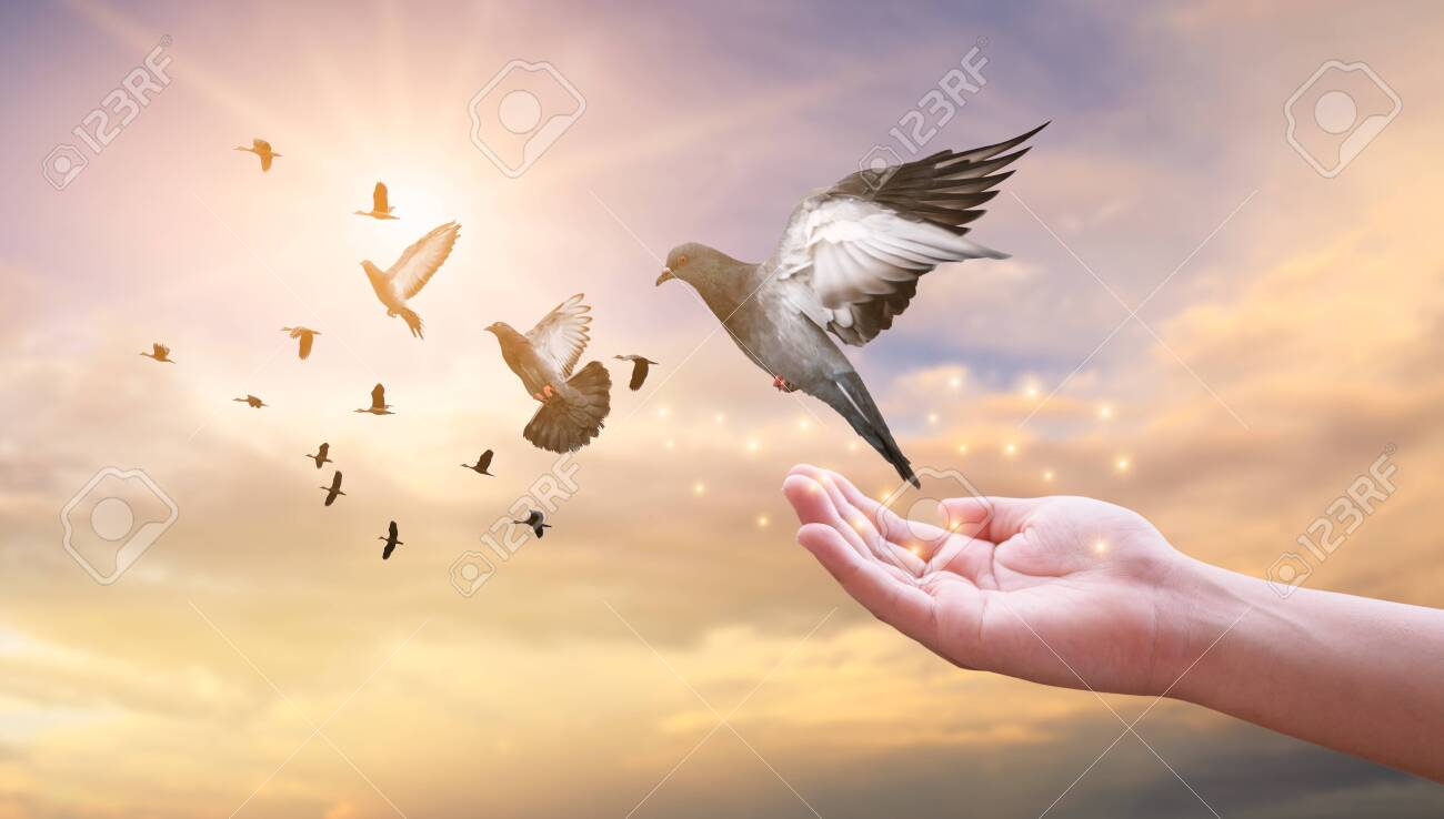 The woman hands free the pigeon into the sky. - 147945954