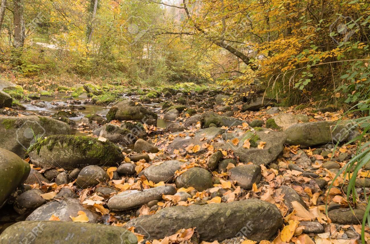 Beautiful Autumn Scene Mountain Creek Forest Landscape And Stock