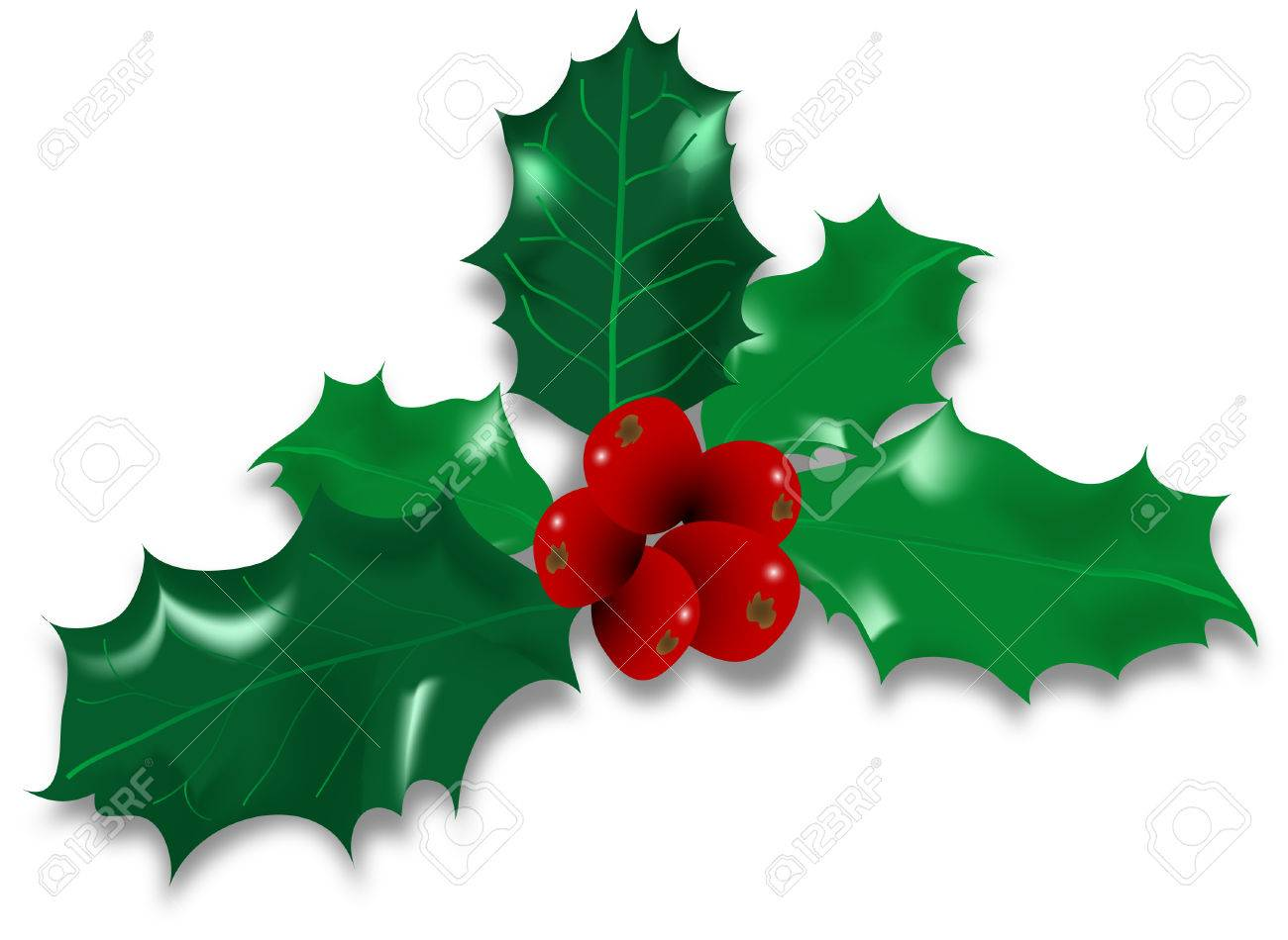 Vector illustration of twig of holly Stock Vector - 3290579