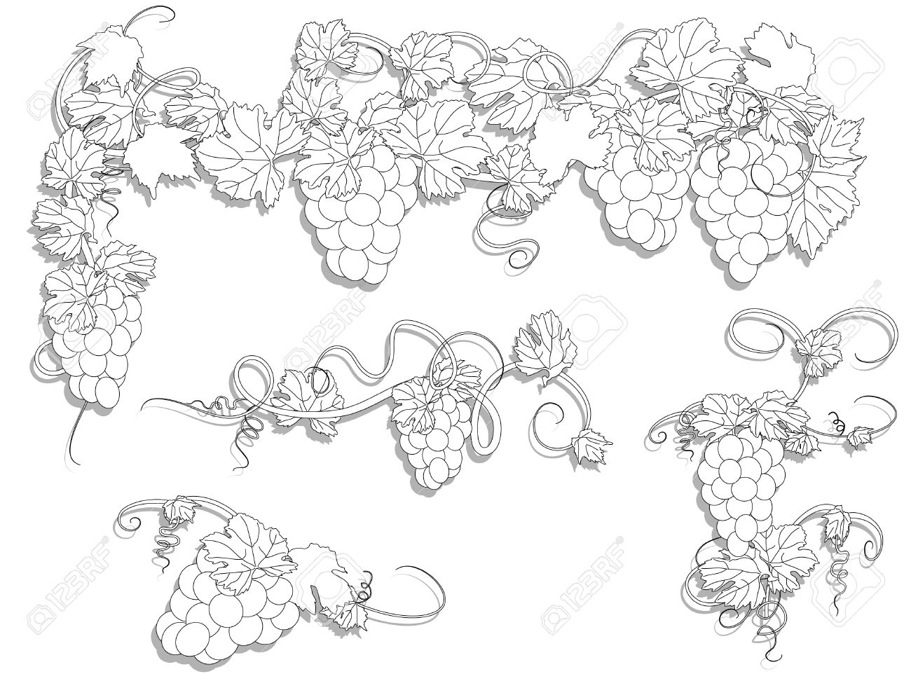 Elements for design with vine leaves and grapes Stock Vector - 8977879