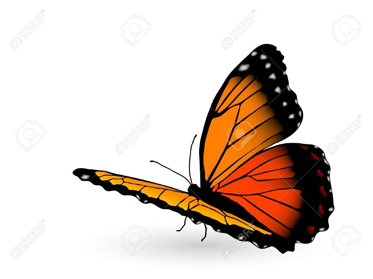 Beautiful orange butterfly on white background Stock Vector - 9567264