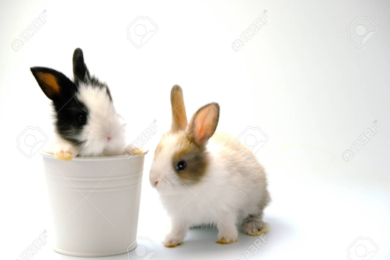 Two rabbits on a white background - 154450532