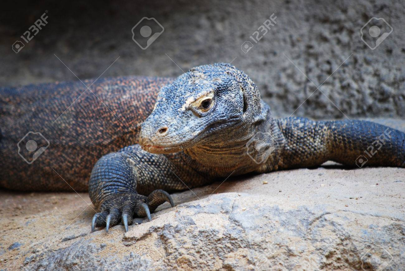 comodo dragon videos