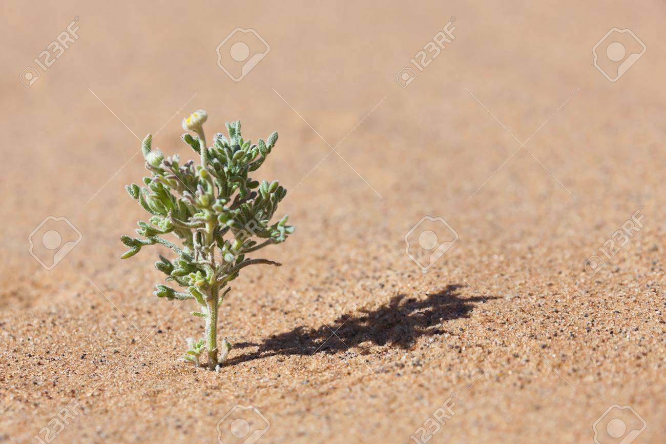 Desert Plant In Sand With Tiny Yellow Flower Stock Photo Picture