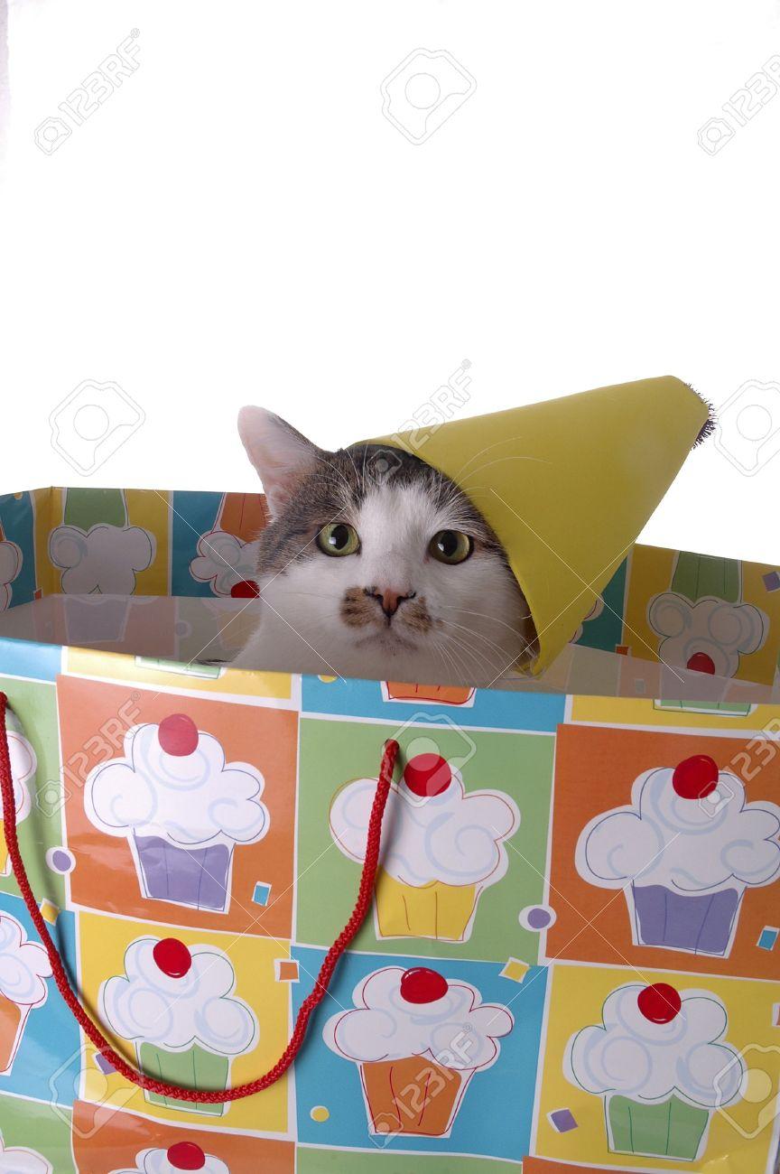 Immagini Stock Ladorabile Gatto Con Un Cappello Di Compleanno Il