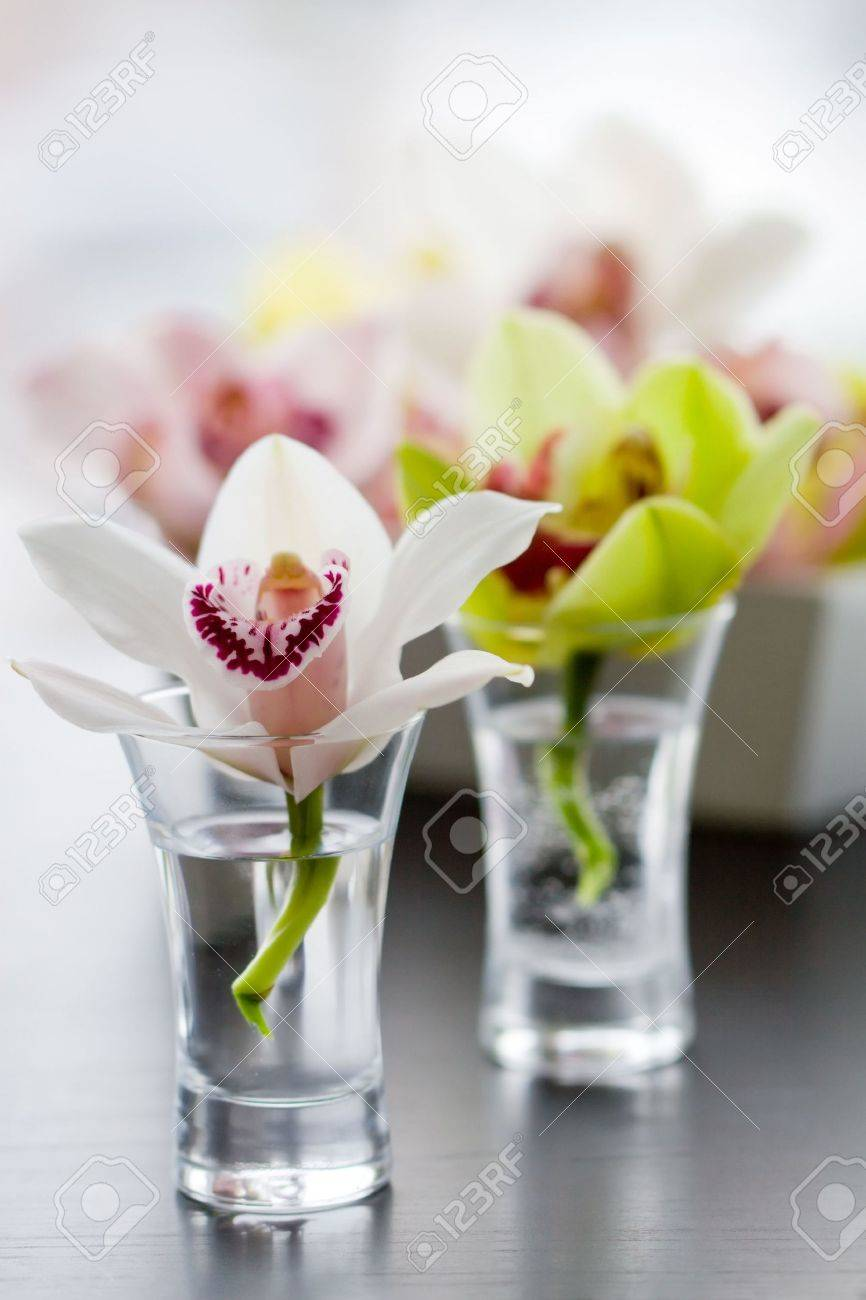 Beaty orchids in small glass vases stock photo picture and beaty orchids in small glass vases stock photo 6430738 reviewsmspy