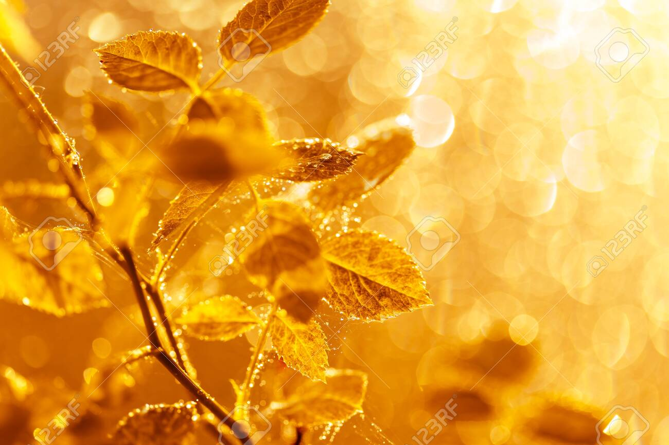 Autumn leaves with water drops and spider web at sunset over blurred background. Soft focus, macro - 129212868