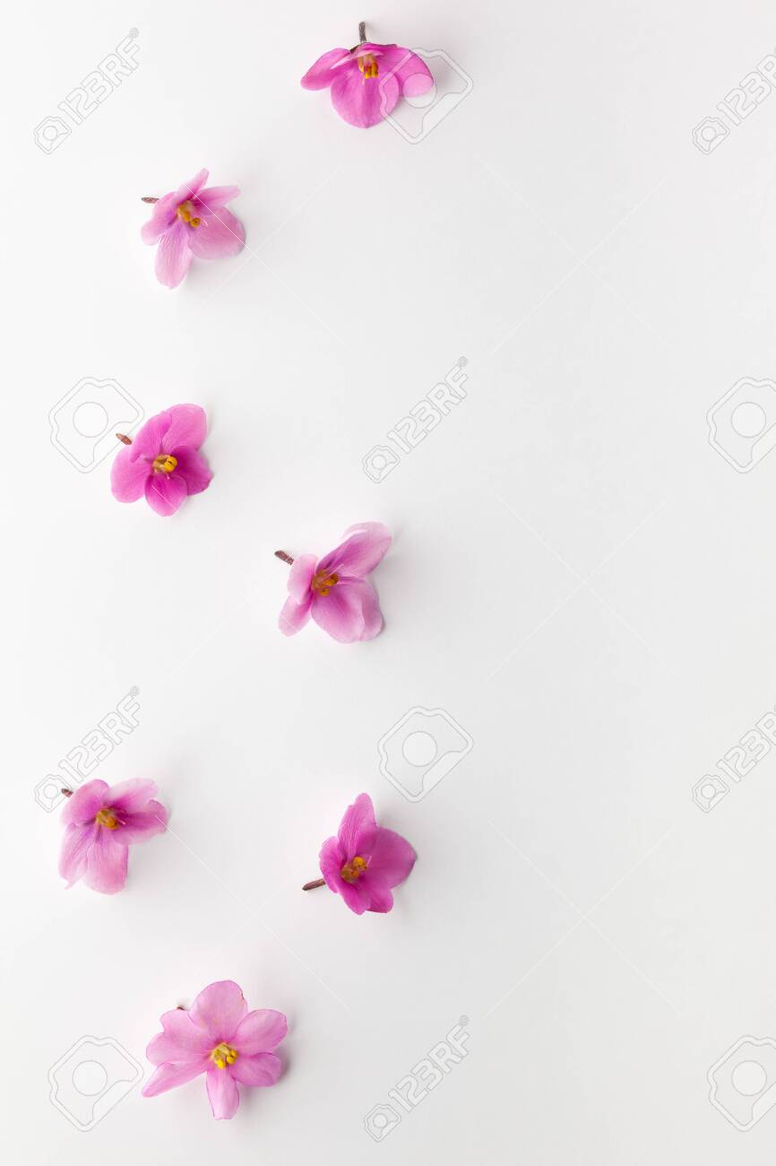 Spring Or Summer Flower Composition With Edible Violets On White Stock Photo Picture And Royalty Free Image Image 147557863