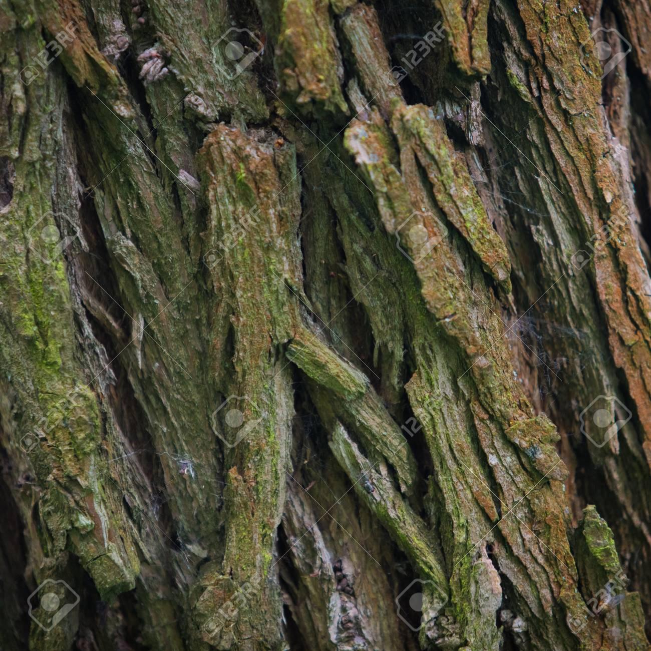Corteza De árbol Textura De Fotograma Completo En La Naturaleza ...