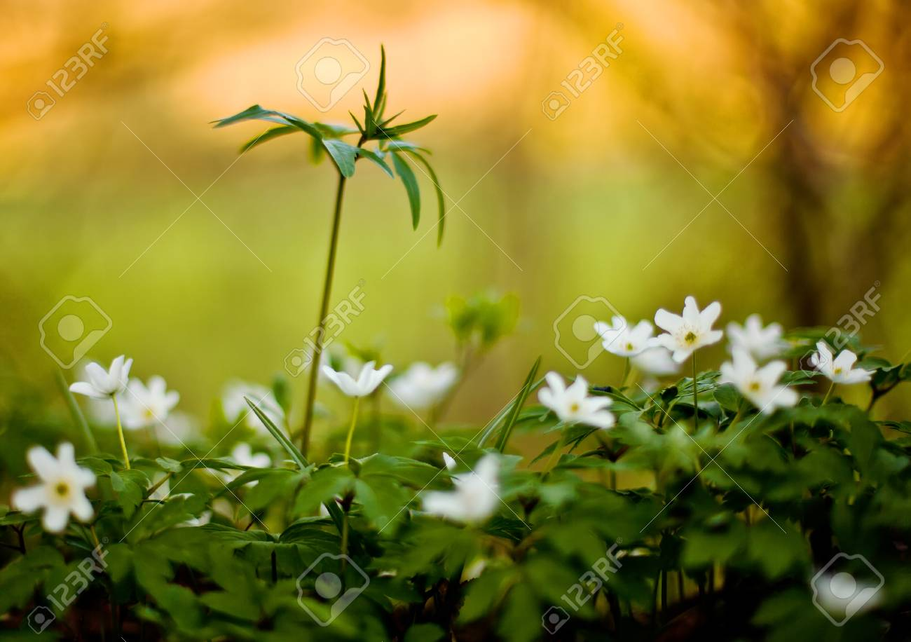 Small plants on a forest floor, shallow depth of field Stock Photo - 55118180