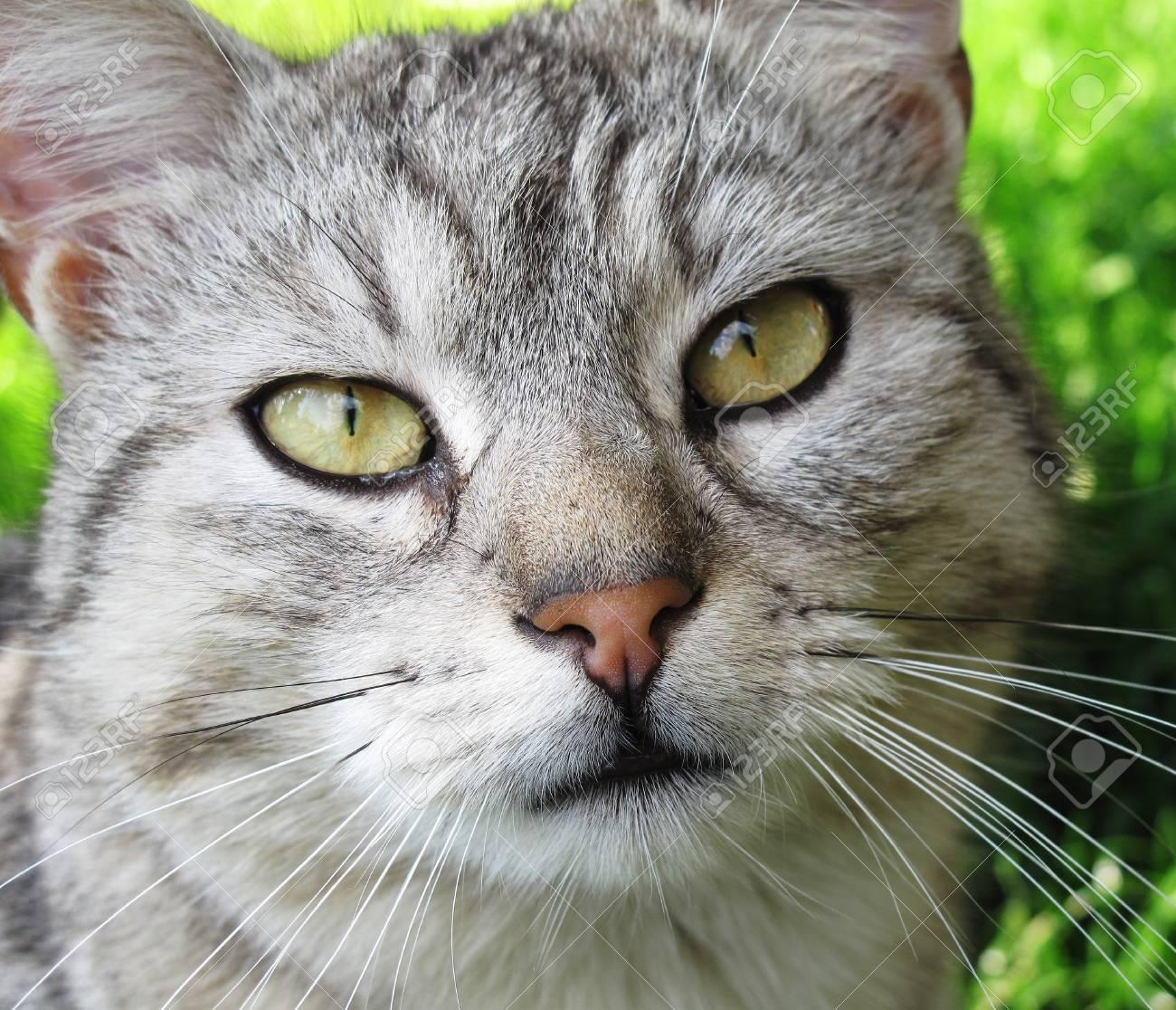 Domestic cat closeup portrait Stock Photo - 55118298
