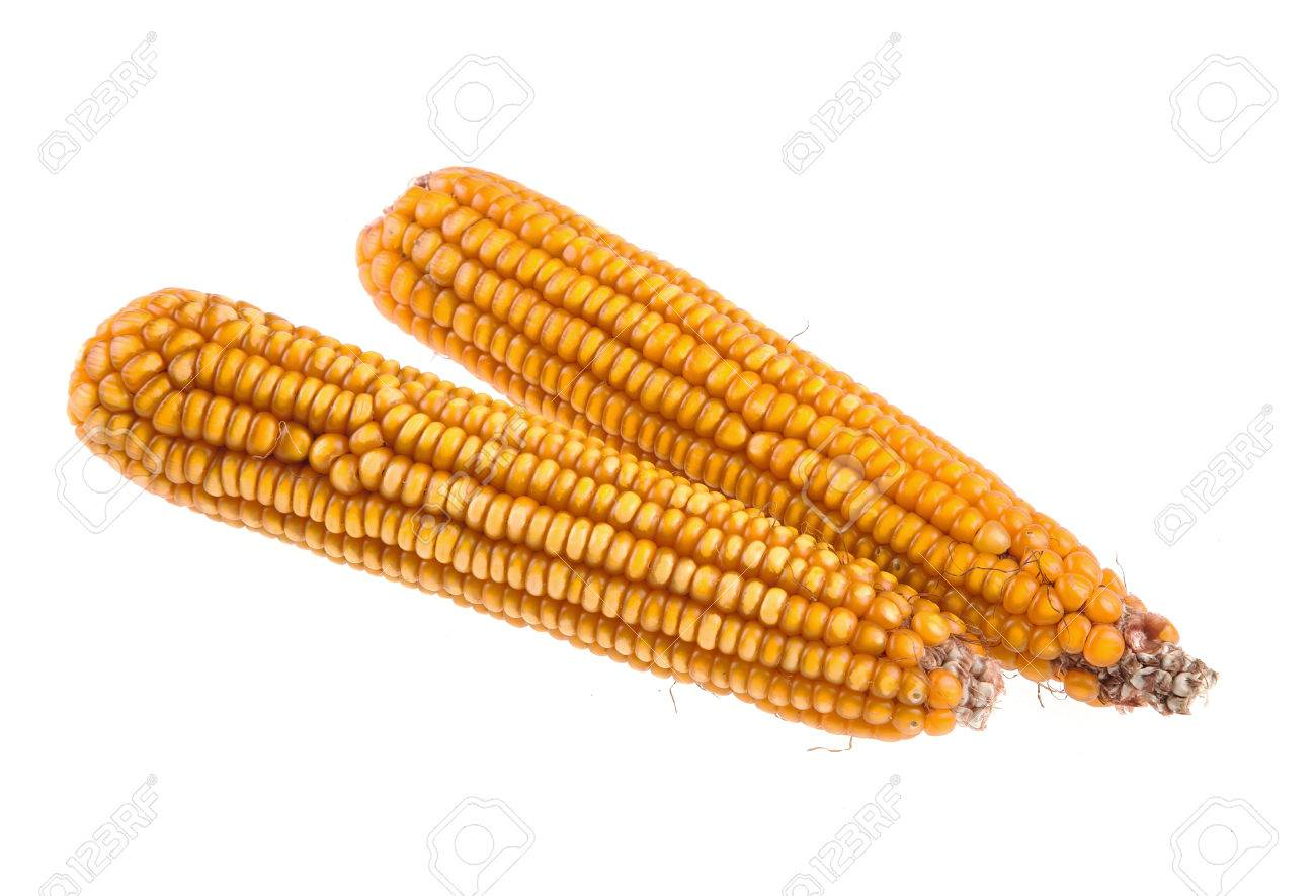 Dry corn on the cobs isolated on white background Stock Photo - 64001726