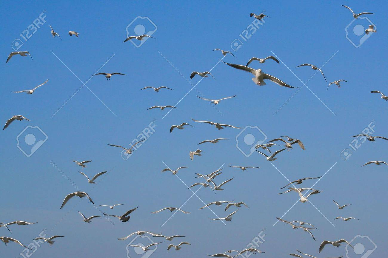 Lots of flying gulls with a blue sky - 11028558