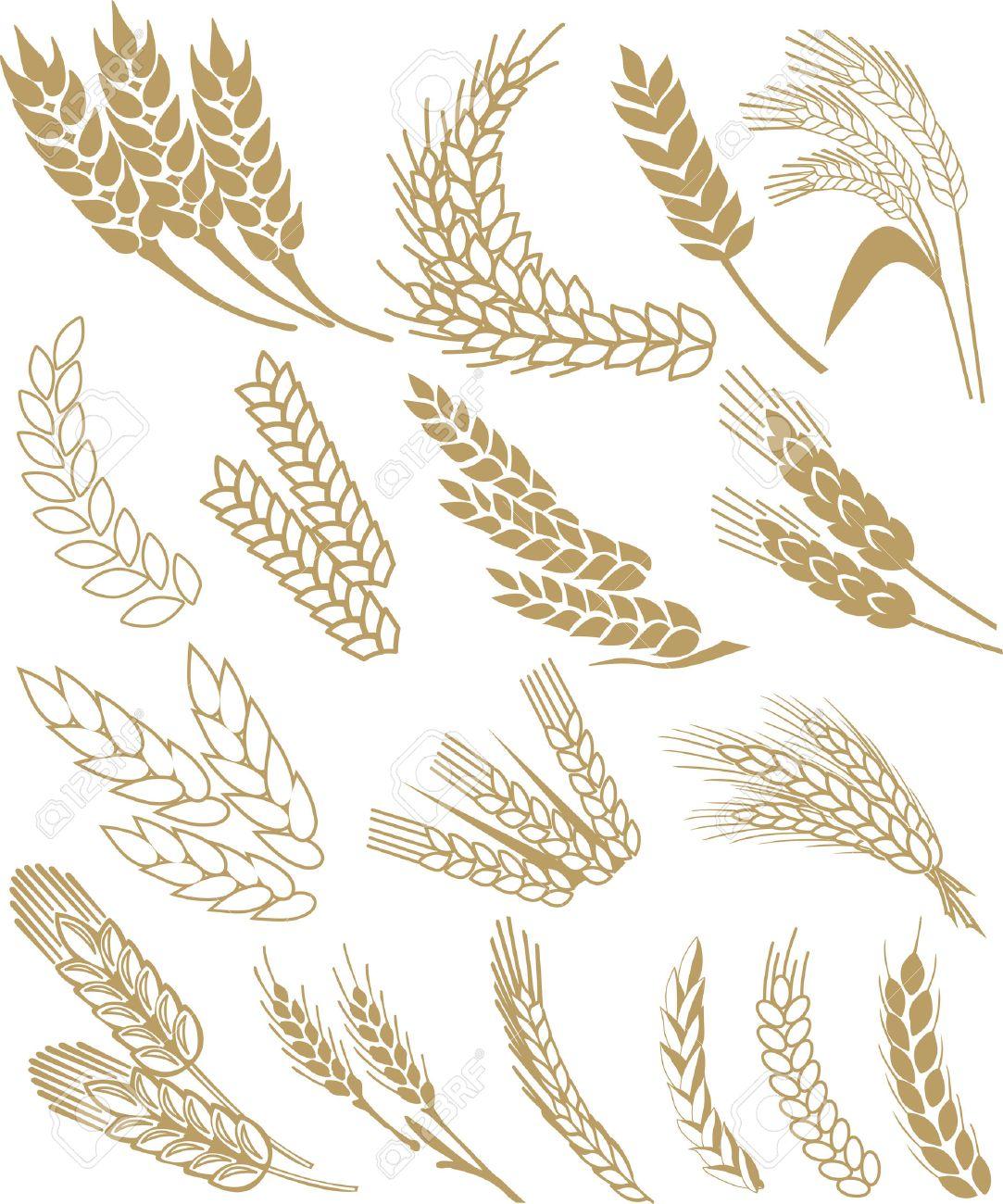 wheat ears Stock Vector - 3786751