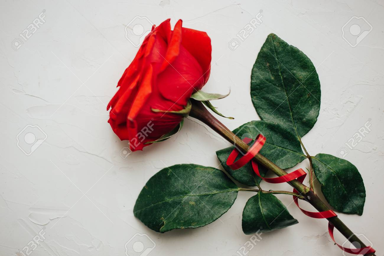 Single Red Rose Red Ribbon On White Plastered Background Beautiful