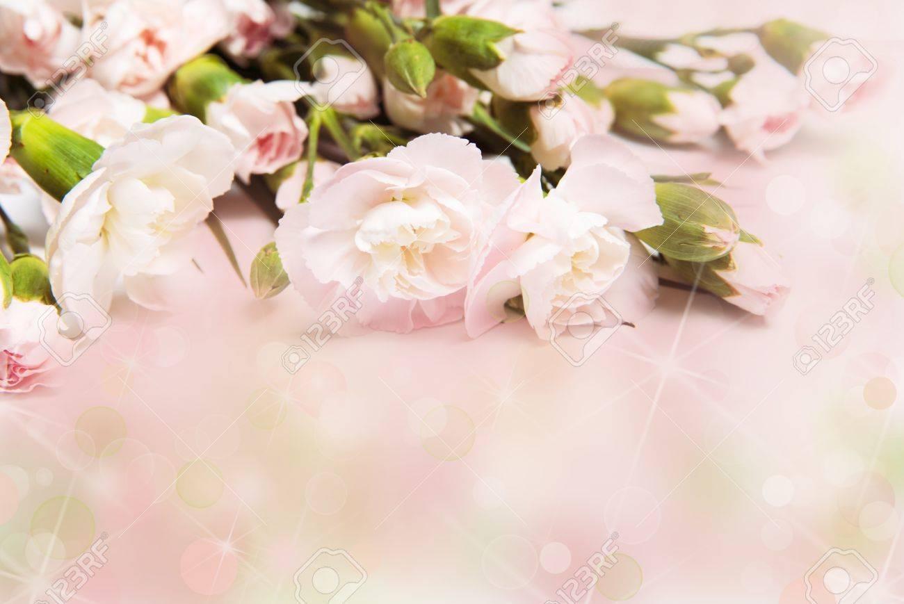 Branch Of Pink Carnation Wedding Flowers Border Frame On Pink