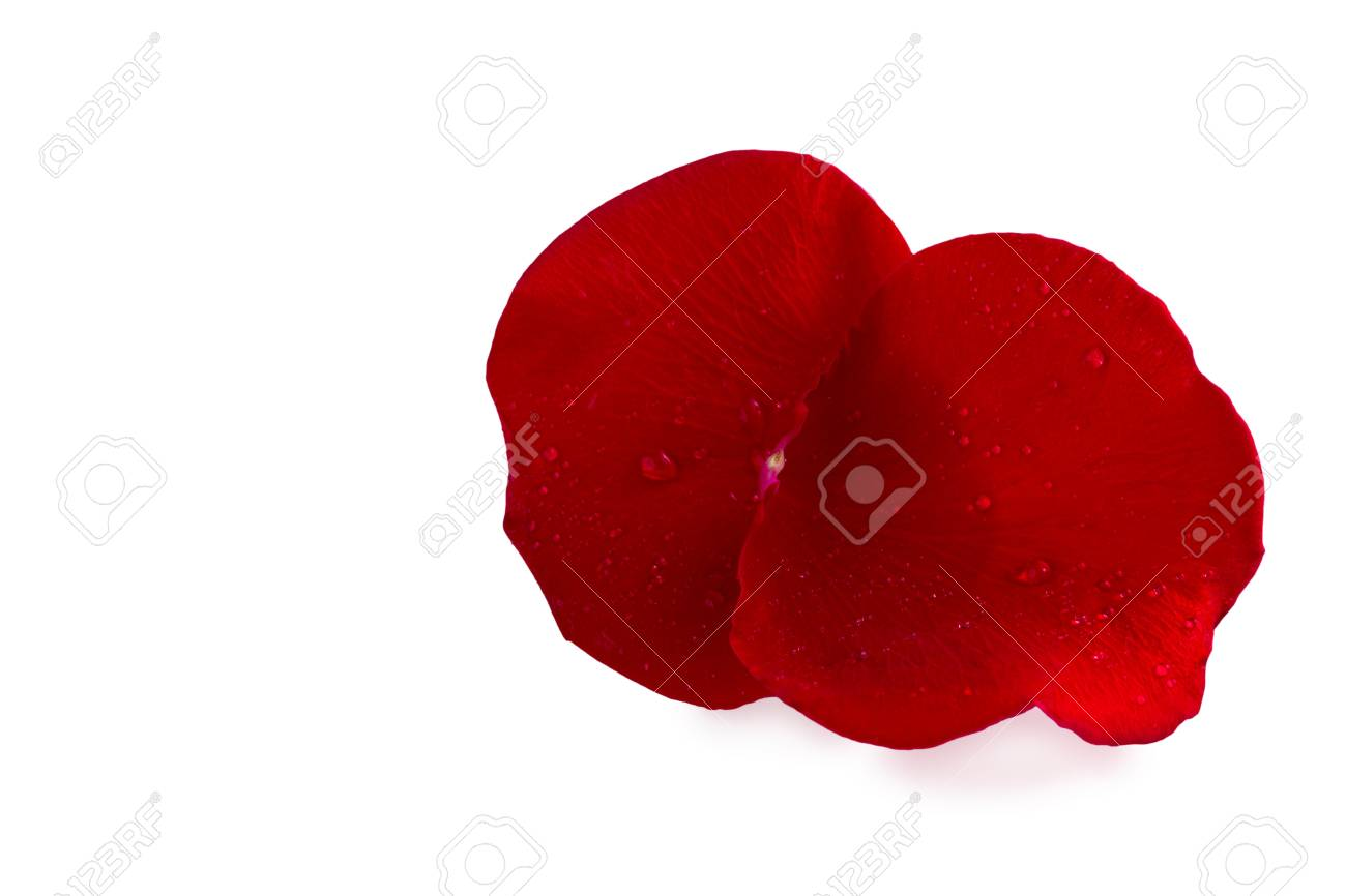 Macro of rose petals with water drops on a white background Stock Photo - 20434170