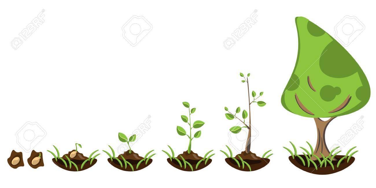 苗園芸植物種子の発芽は地面でのイラスト素材ベクタ Image 75095961