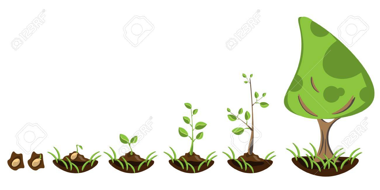 Seedling gardening plant. Seeds sprout in ground. - 75095961
