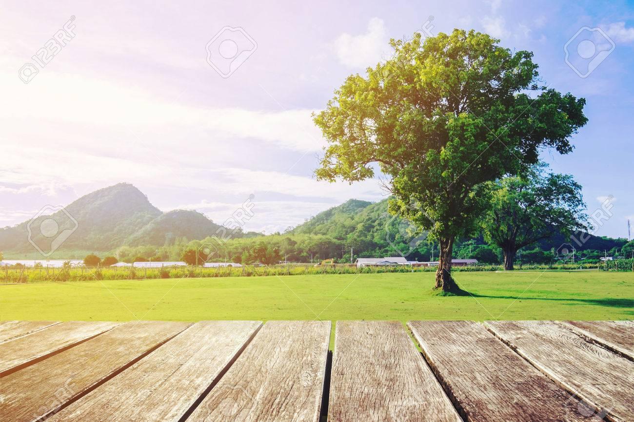 Tono Terraza : Terraza de madera con vista natural y solo árbol el tono de la