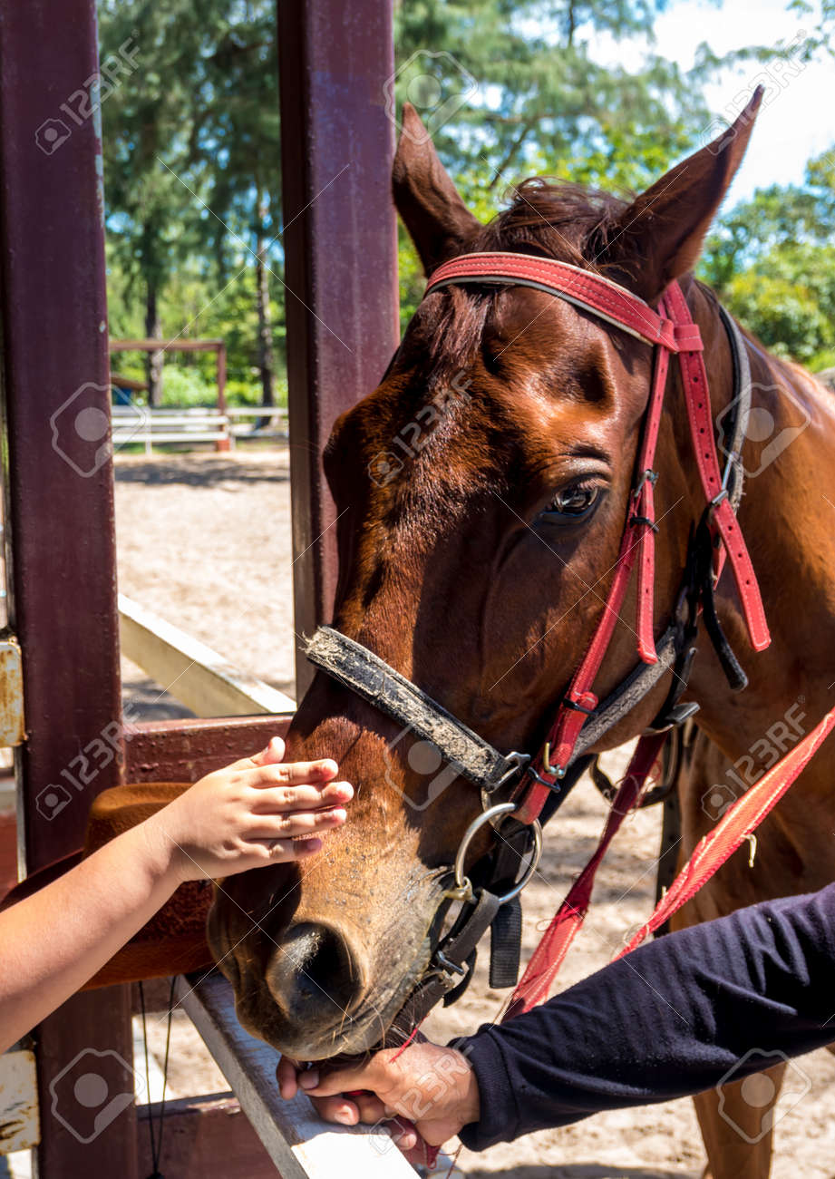 Horse close up That can see clear eyes, fine-hair skin, and wrinkles - 167263886