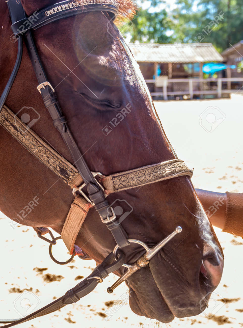 Horse close up That can see clear eyes, fine-hair skin, and wrinkles - 167263888