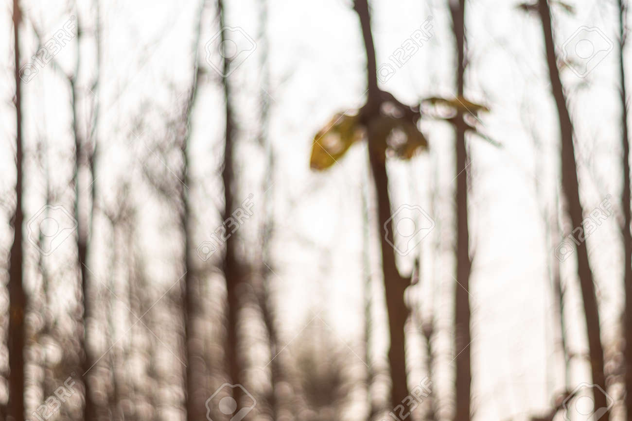 The background image was created by photographing the drought and overgrown teak plantation in the morning light, sunrise in summer - 172425368