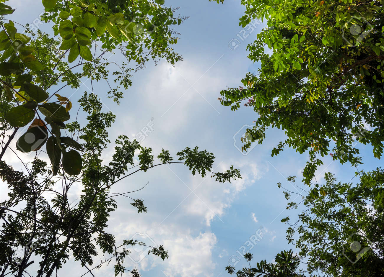 A Low Vantage Point to the Blue sky through the leaves of tree , Looking up to the sky - 172429613