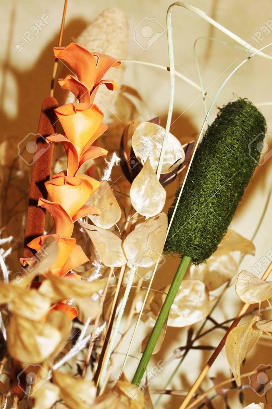 Fiori Secchi.Fiori Secchi Stock Photo Picture And Royalty Free Image Image