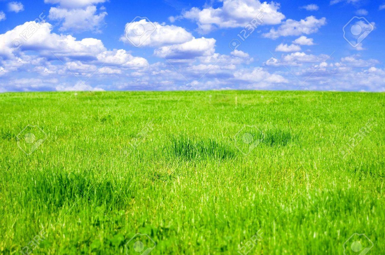 Grassy field conceptual image grassy field in summer stock photo grassy field conceptual image grassy field in summer stock photo 7627759 voltagebd Images