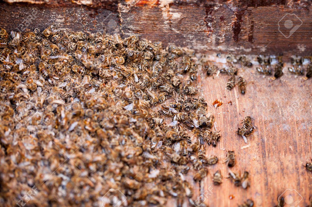 muere de abejas