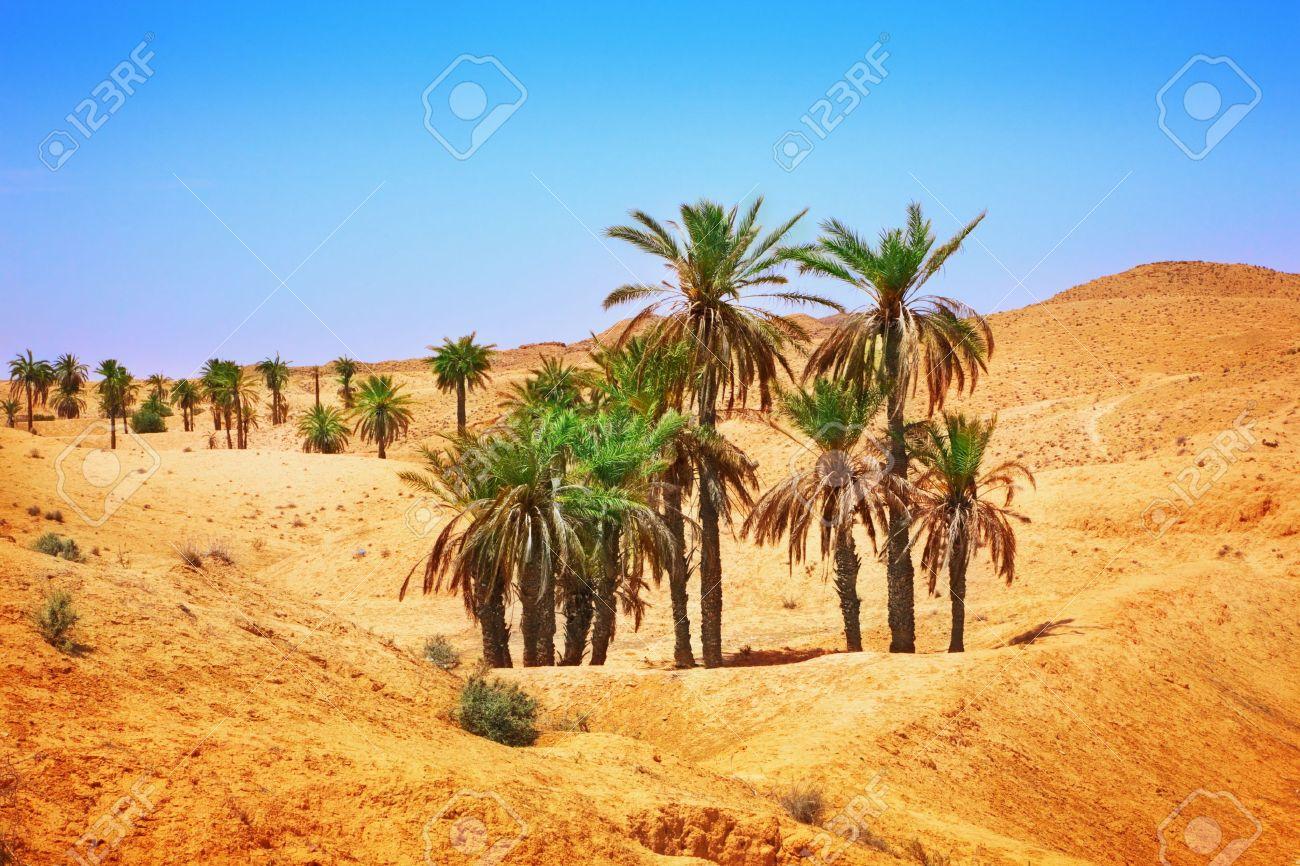 Рослини в пустелі фото 14 фотография