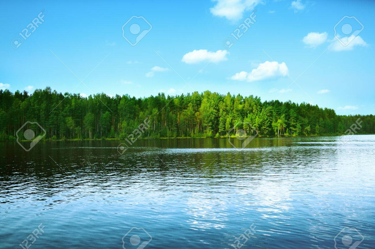 Forest lake - 32334075
